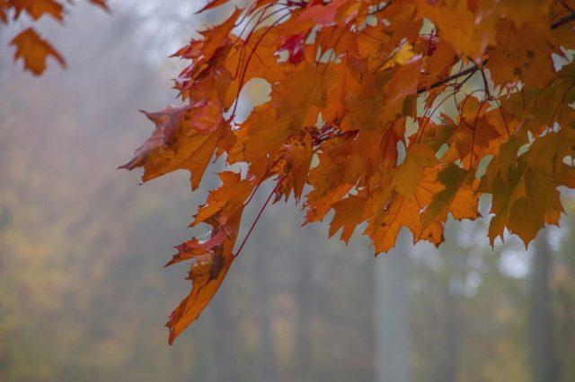 Jak zadbać o siebie jesienią? Jesienna pielęgnacja